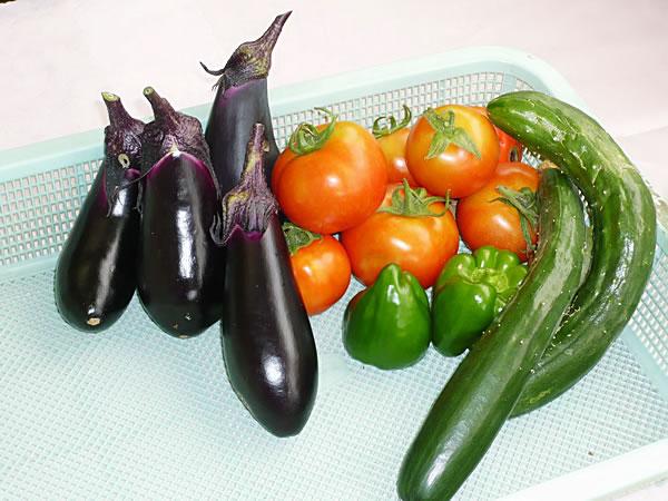 食育活動「園で採れた野菜」